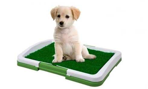 obrázok Toaleta pre psov